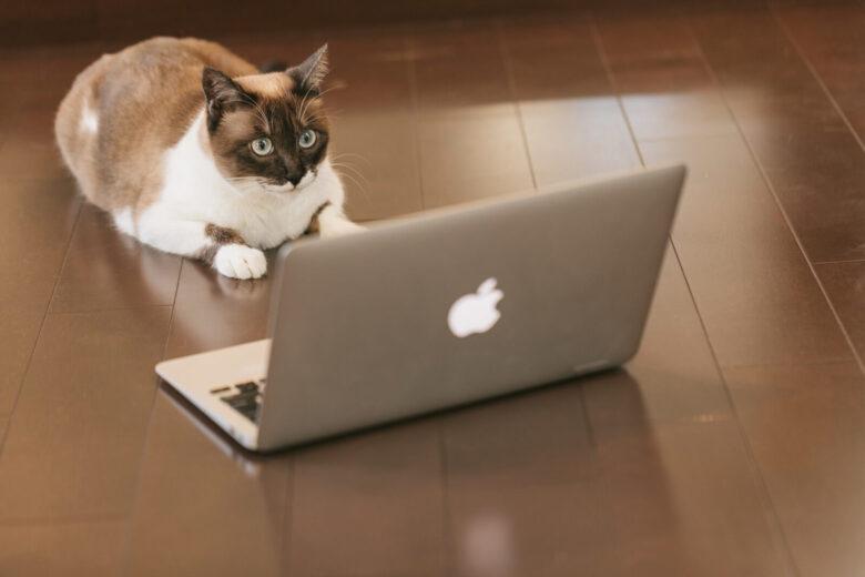 アドセンスの情報が多すぎて混乱している猫