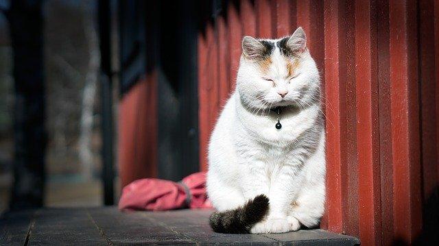 瞑想している猫